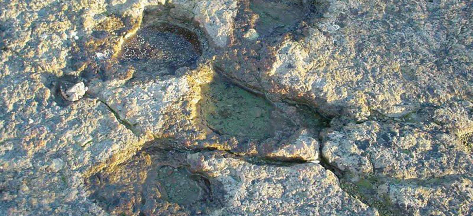 Huellas fósiles de Cal Prat Barrina